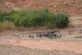 Hotel restaurant Kasbah Ait-Arbi - Une caravane de nomades